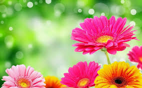 bright flower wallpapers on wallpaperplay