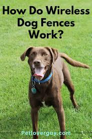 How Do Wireless Dog Fences Work Dog Fence Wireless Dog Fence Dogs