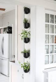herb garden for your kitchen
