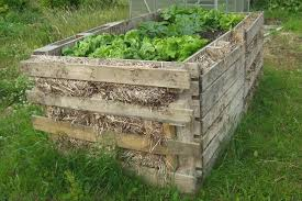 raised bed built with pallets straw