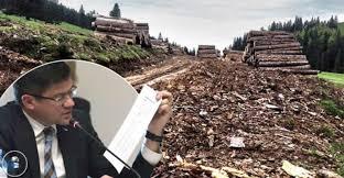 Ministrul Mediului, paravan pentru un prapad ecologic. Firma unui ...