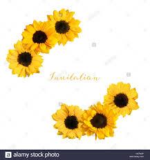 Dos Vinetas De Brillante Amarillo Girasol Fotos Aislado En Blanco