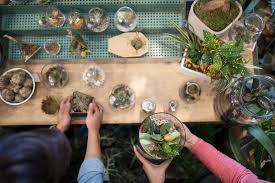 plants that grow well in terrariums