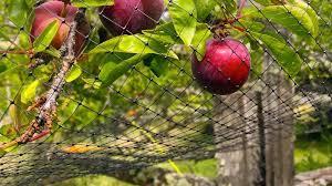 Good Fences Make Good Neighbors Of Humans Wildlife Abc News