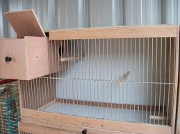 how to make a bird cage in 10 steps