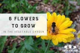 flowers to grow in the vegetable garden