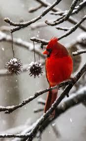 photos february snowfall gallery