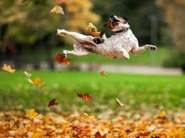 Autumn Dog - Dogs & Animals Background Wallpapers on Desktop Nexus (Image 2505052)