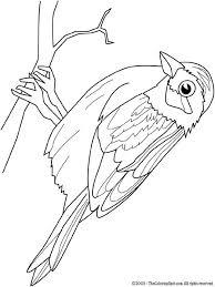 Kleurplaat Vogels Kleurplaten Vogels Tekenen Vogels