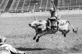 bull riding wallpaper wallpapers heroes