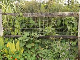 8 Abundant Fodder Forest Plants And How To Use Them The Permaculture Research Institute