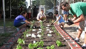 fall vegetable garden in central texas
