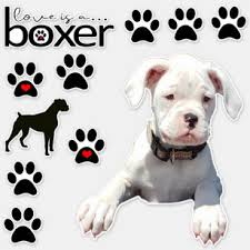 Boxer Dog Bumper Stickers Decals Car Magnets Zazzle