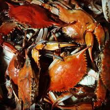 Hunters Crabs - Home - Grasonville ...