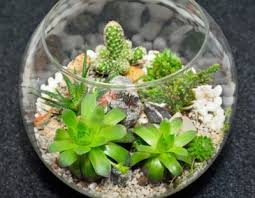 succulent terrarium instructions
