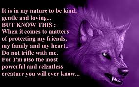 alpha wolf wallpaper on hipwallpaper