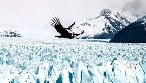 Adrian-Hill-Condors-over-Perito-Moreno-Glacier | South America ...