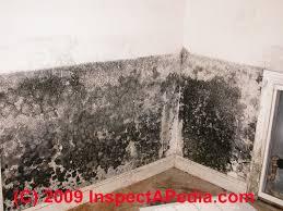 toxic black mold growth