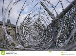 Coils Of Razor Wire On Metal Mesh Fence Stock Photo Image Of Cresson State 118175274