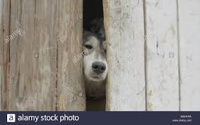 Dog Hole Fence High Resolution Stock Photography And Images Alamy