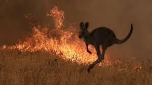 Las consecuencias de los incendios en Australia llegan a América Latina ›  Mundo › Granma - Órgano oficial del PCC