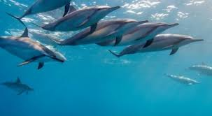 0493 blue dolphin live wallpaper