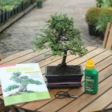 12 year old bonsai tree gift set by all