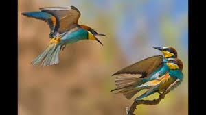 صور عصافير شاهد جمال العصفور سبحان الله كلمات جميلة