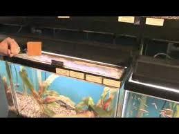remove oxidation from aquarium glass