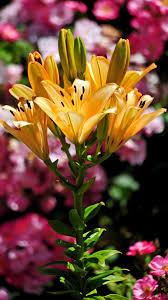 2160x3840 الزهور خلفية Phablet جميلة خلفية Hd 728509