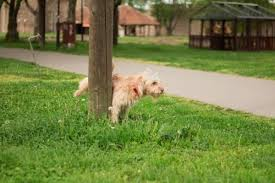 6 natural dog repellents homemade