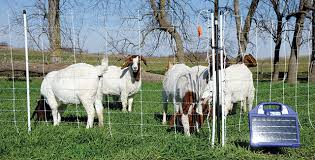 Proven Solar Energizers For Electric Fence