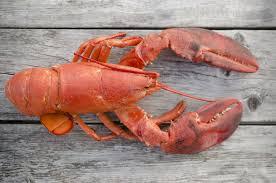 Lobster Emoji to Rally for Transgender ...