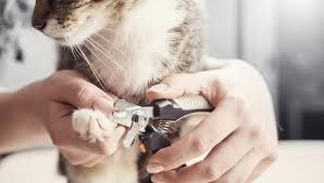 pet health proper nail grooming basics