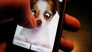 eye puppy live wallpaper you