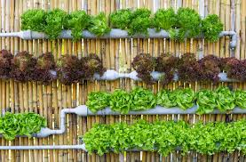 Everything Important About Vertical Gardens Little Real Estate