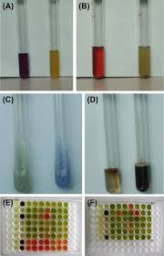 biochemical testing an overview