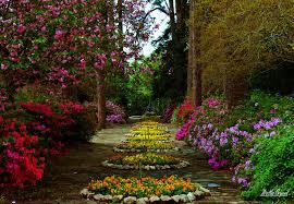 flower garden hd wallpaper background