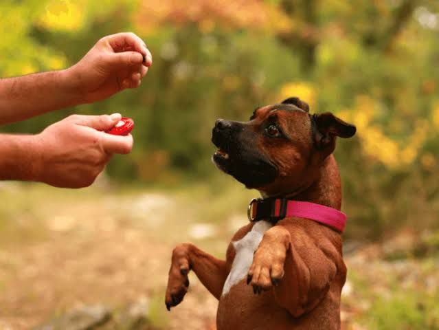 "Image result for dog training"""