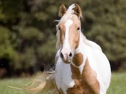 صور حصان رمزيات و خلفيات حصان بجودة Hd خيول عربية 6 سوبر كايرو