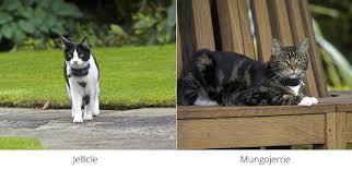 Containment Fences Feline Friends