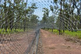 Cat Proof Fence In Kakadu Aims To Establish Role Of Cats In Mammal Decline Northern Australia Environmental Research Portal