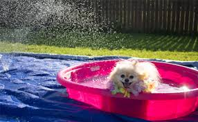 pup their very own backyard water park