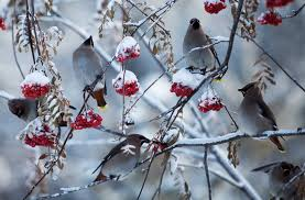 ثلج وطيور وورد زحمة