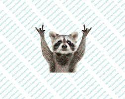 Raccoon Decal Etsy