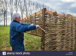 Craftsman Making Traditional Wattle Fence By Weaving Thin Willow Stock Photo Alamy