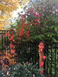 Traditional Fence Or Borderline Hedge Each Has Advantages