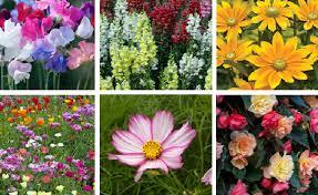 top 10 summer bedding flower plants