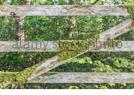 Old Wooden Farm Gate With Moss Covered Strengthening Cross Brace Metaphor Seen Better Days A Forgotten Corner Of Place Colour Version Is 2bh3470 Stock Photo Alamy