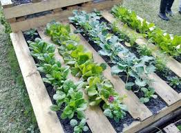 how to make a wood pallet garden new